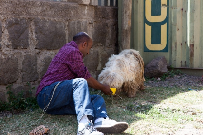 Vet Dawit trying to capture Scraggles