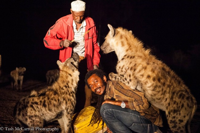Biniyam shows me how its done - just a casual hyena on your back being fed!