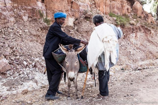 Donkeys loaded up