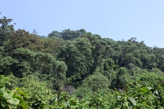 The different layers of the jungle